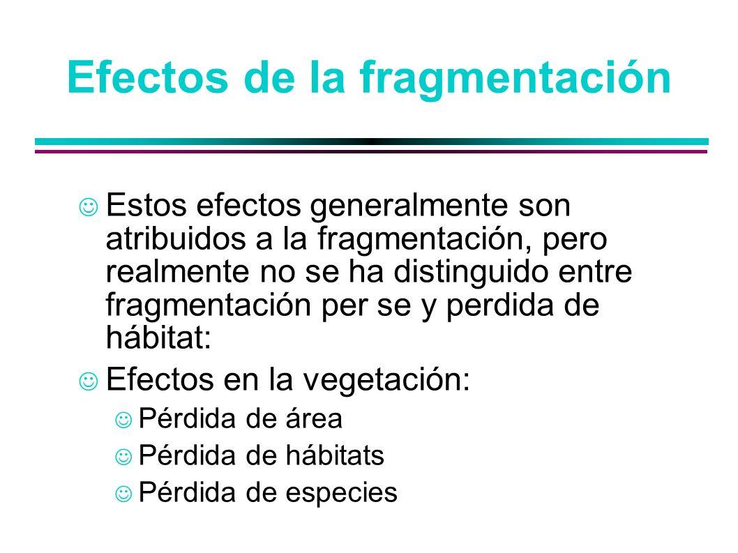 Efectos de la fragmentación