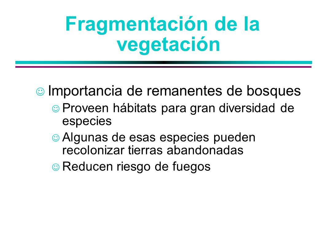 Fragmentación de la vegetación