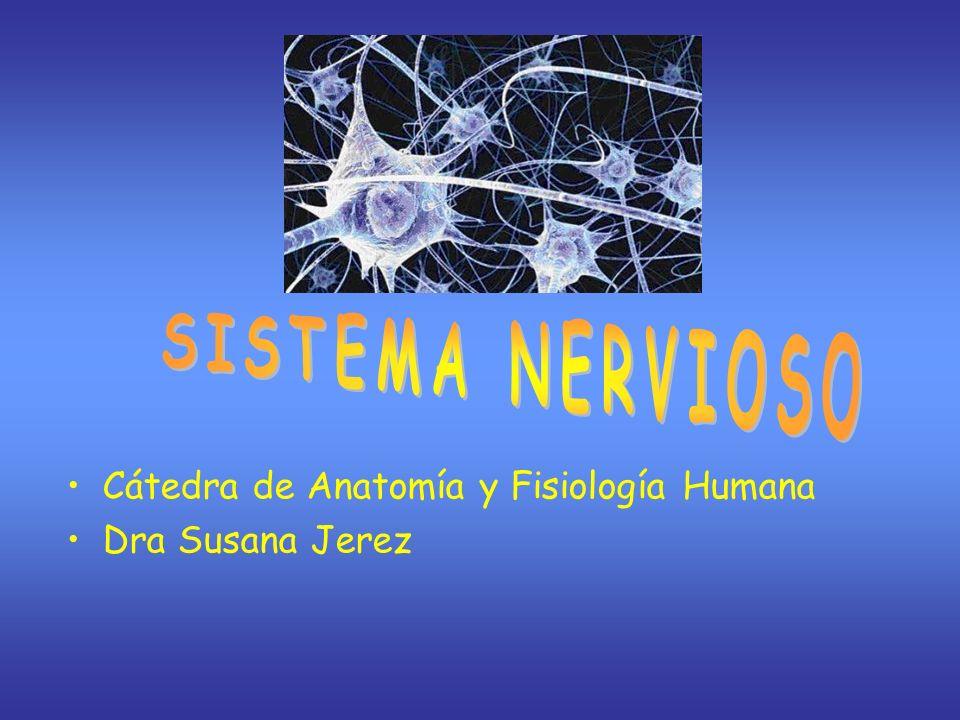 SISTEMA NERVIOSO Cátedra de Anatomía y Fisiología Humana