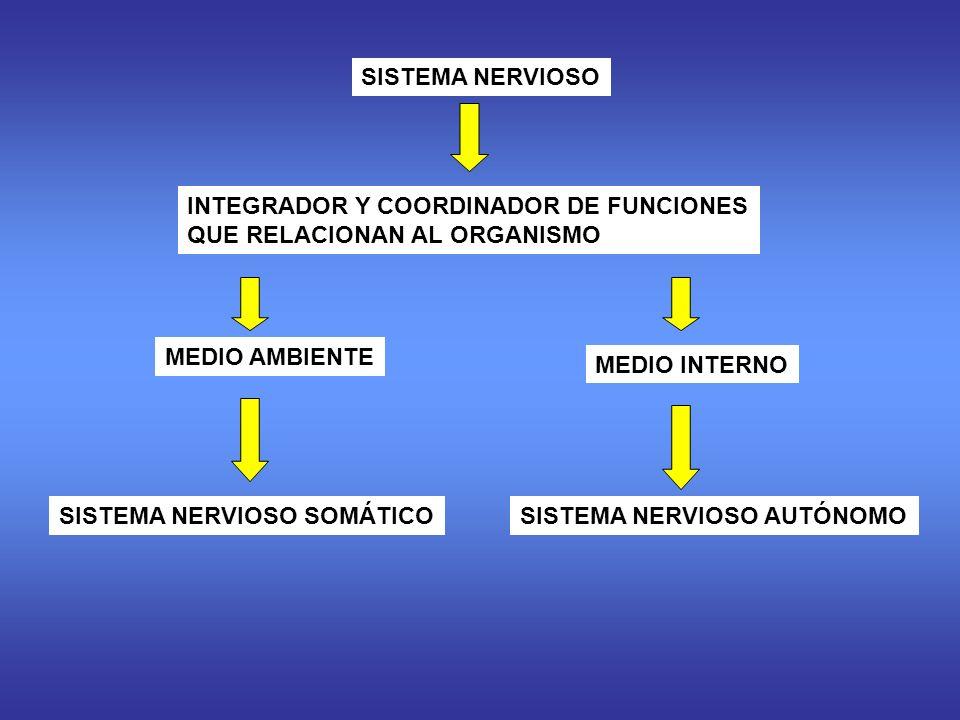 SISTEMA NERVIOSO INTEGRADOR Y COORDINADOR DE FUNCIONES. QUE RELACIONAN AL ORGANISMO. MEDIO AMBIENTE.