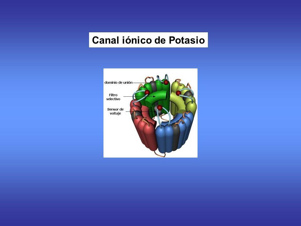Canal iónico de Potasio