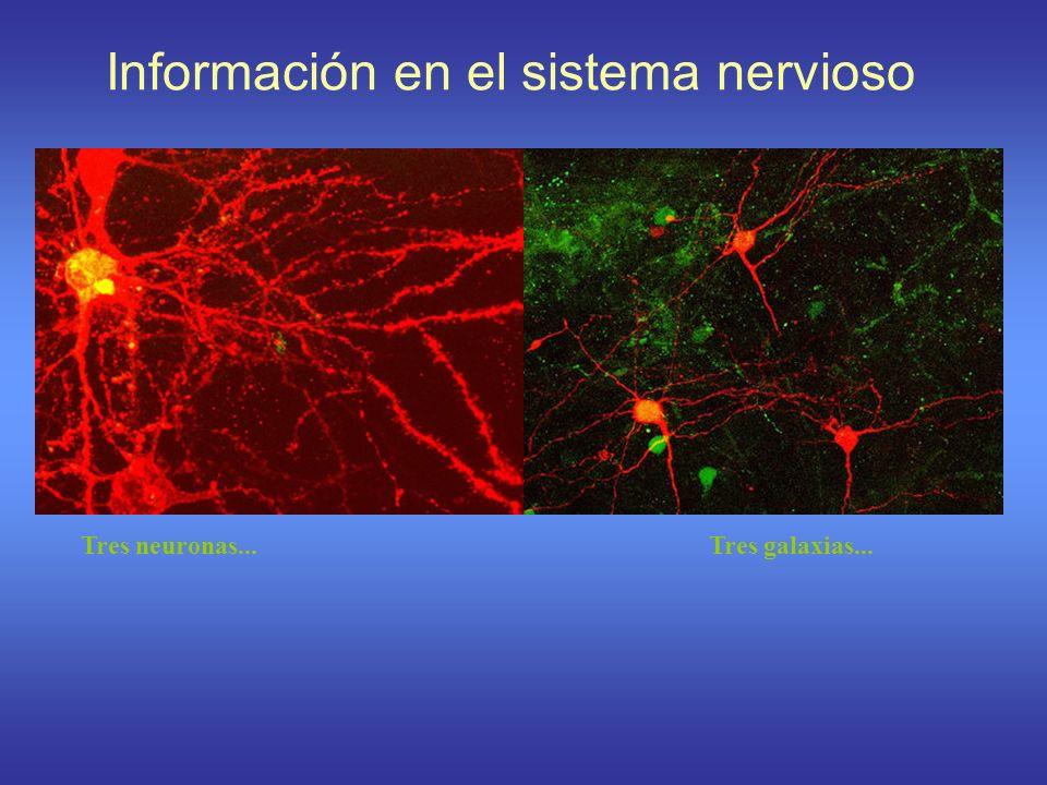 Información en el sistema nervioso