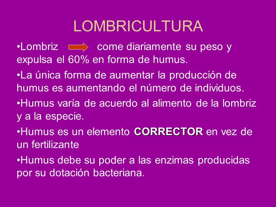 LOMBRICULTURA Lombriz come diariamente su peso y expulsa el 60% en forma de humus.