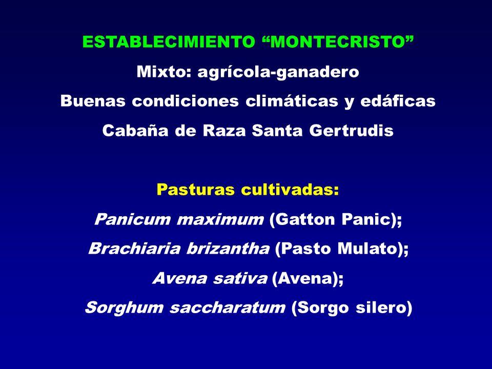 ESTABLECIMIENTO MONTECRISTO Mixto: agrícola-ganadero