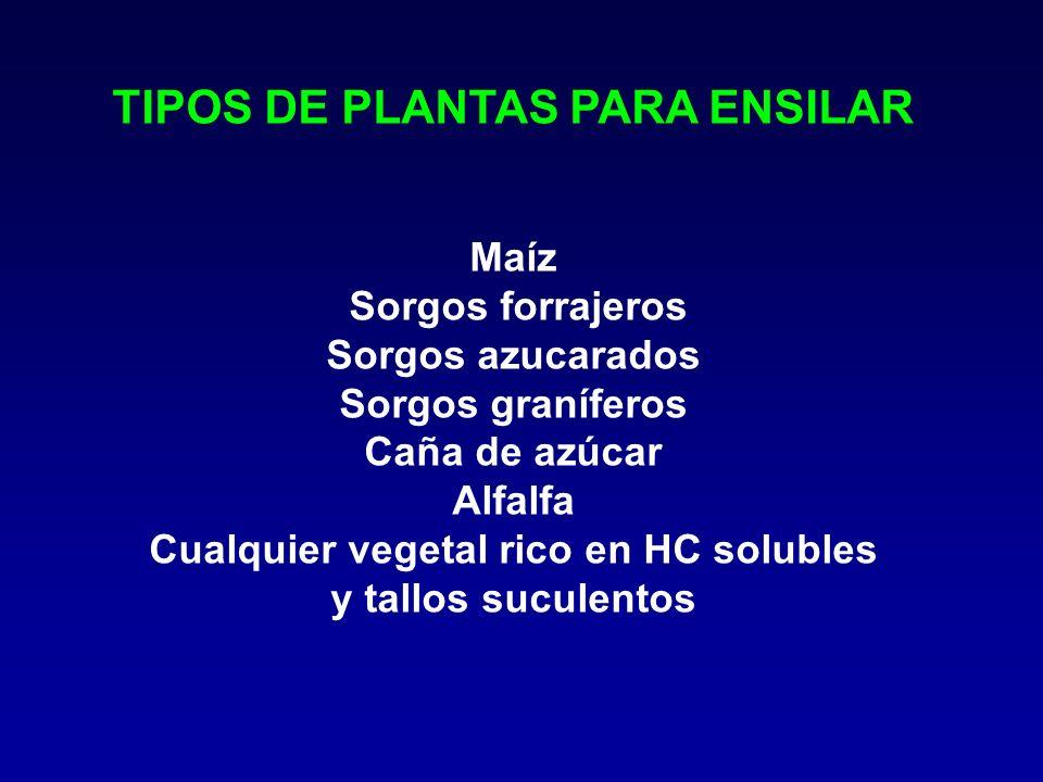 TIPOS DE PLANTAS PARA ENSILAR Cualquier vegetal rico en HC solubles
