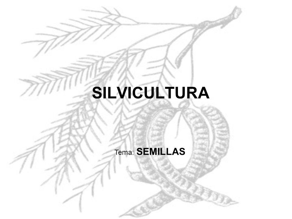 SILVICULTURA Tema: SEMILLAS