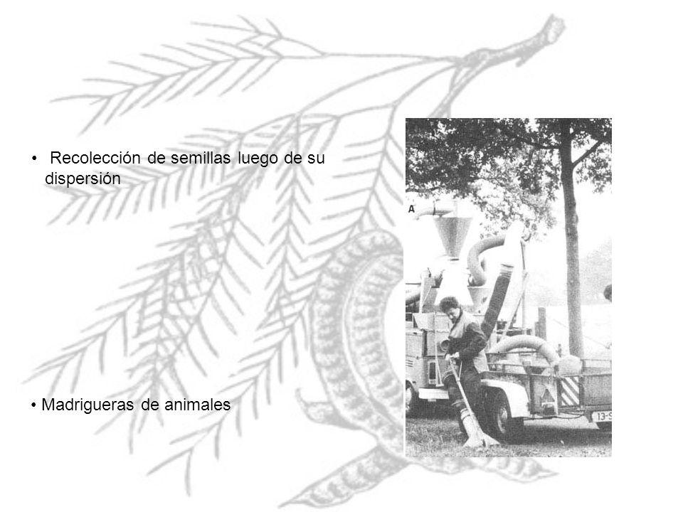 Recolección de semillas luego de su dispersión