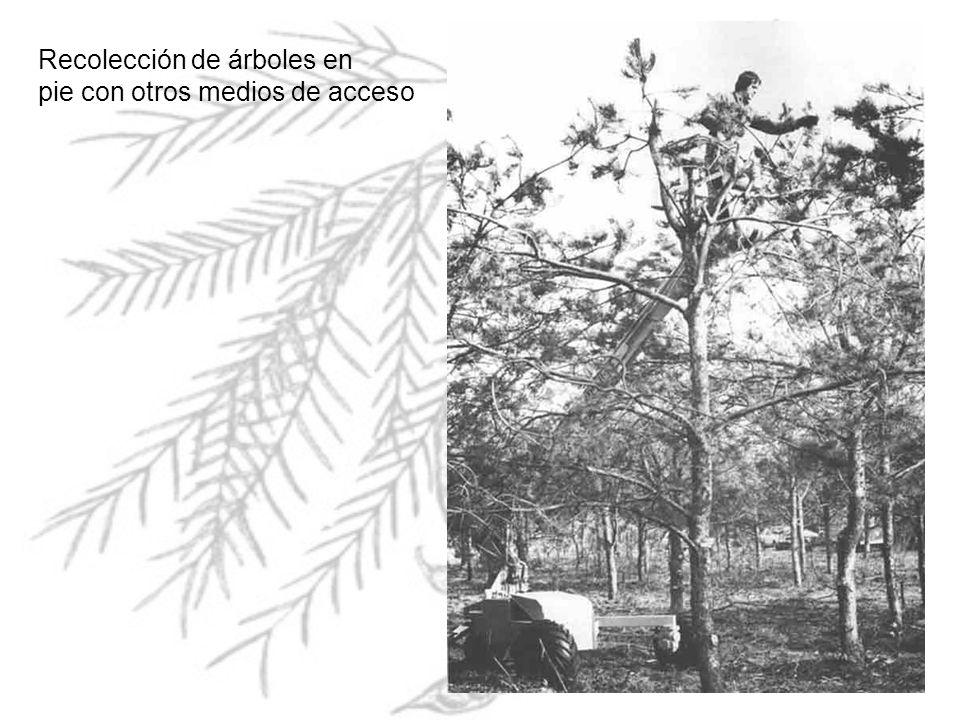 Recolección de árboles en
