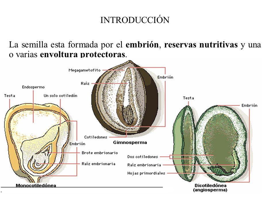 La calidad de la semilla se basa en: