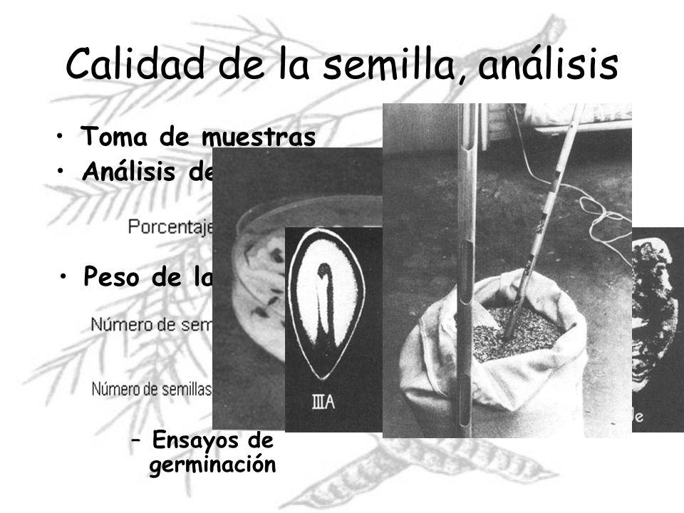 Calidad de la semilla, análisis