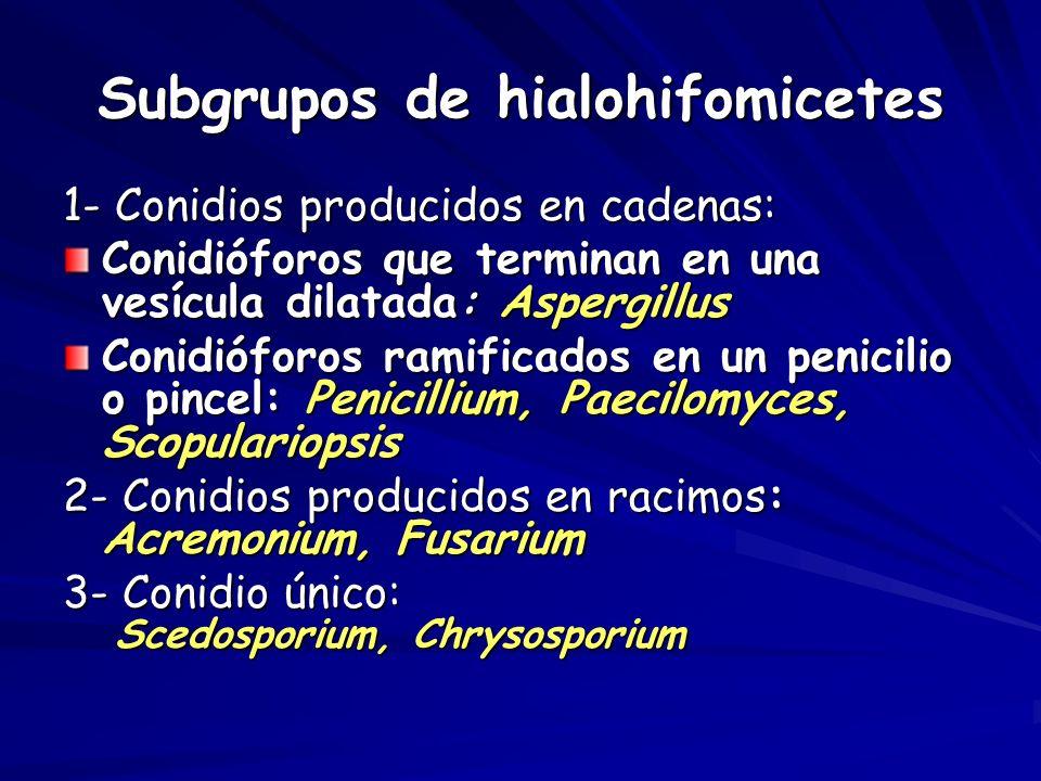 Subgrupos de hialohifomicetes