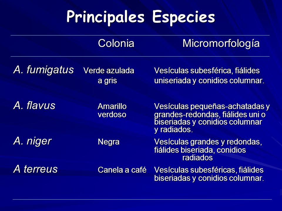 Principales Especies Colonia Micromorfología