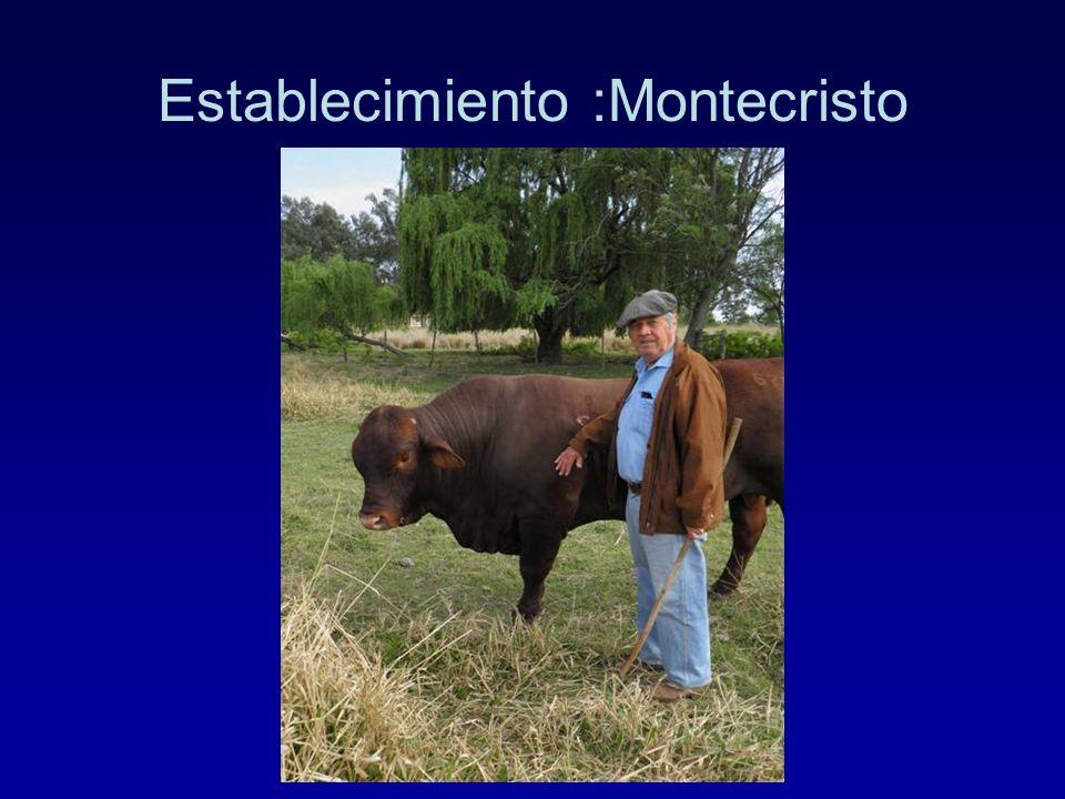 Establecimiento :Montecristo
