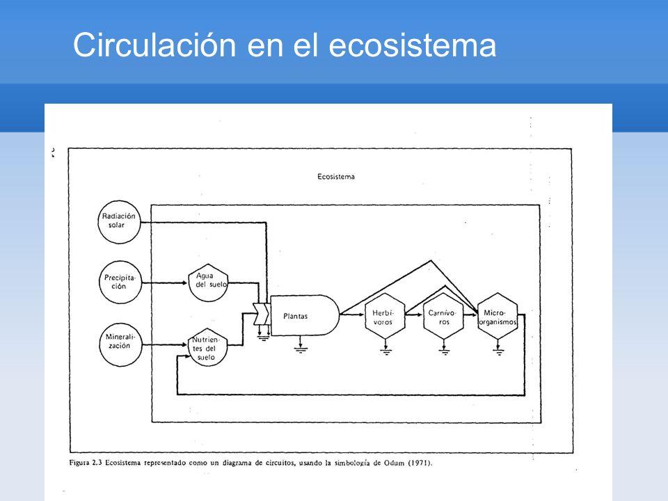 Circulación en el ecosistema