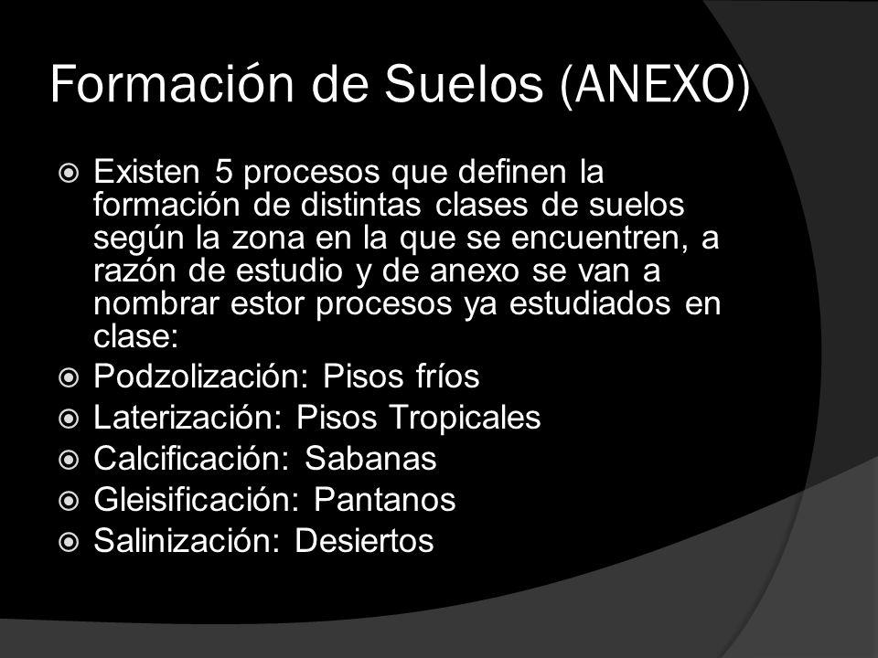 Formación de Suelos (ANEXO)