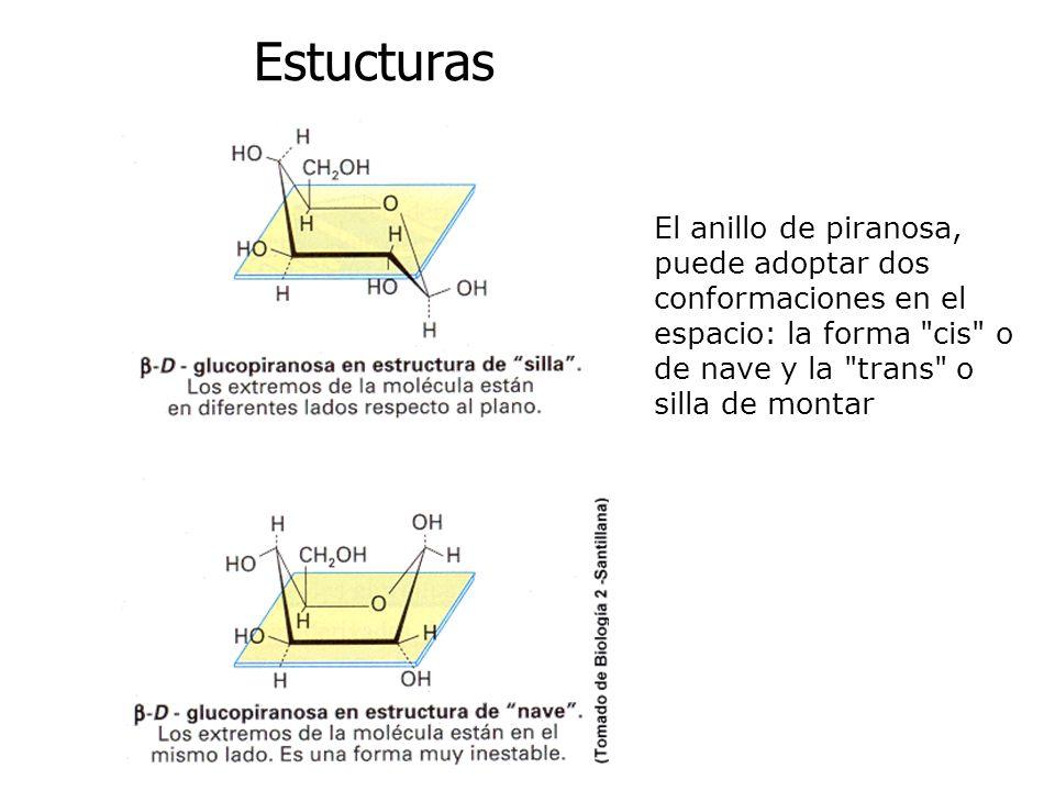Estucturas El anillo de piranosa, puede adoptar dos conformaciones en el espacio: la forma cis o de nave y la trans o silla de montar.