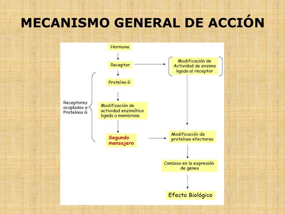 MECANISMO GENERAL DE ACCIÓN