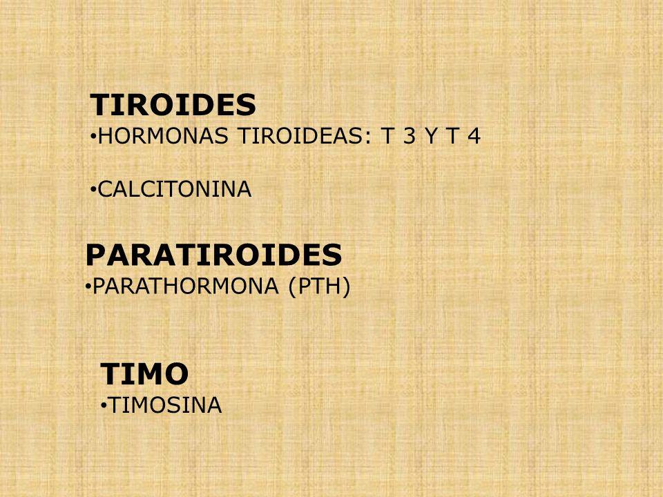 TIROIDES PARATIROIDES TIMO HORMONAS TIROIDEAS: T 3 Y T 4 CALCITONINA