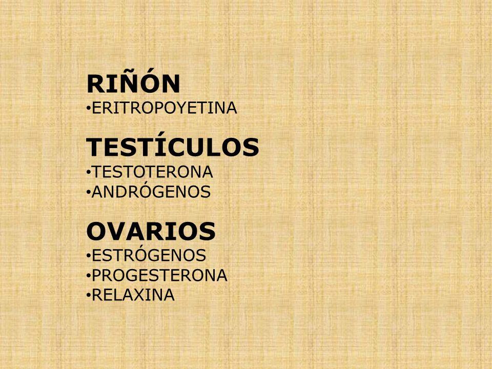 RIÑÓN TESTÍCULOS OVARIOS ERITROPOYETINA TESTOTERONA ANDRÓGENOS