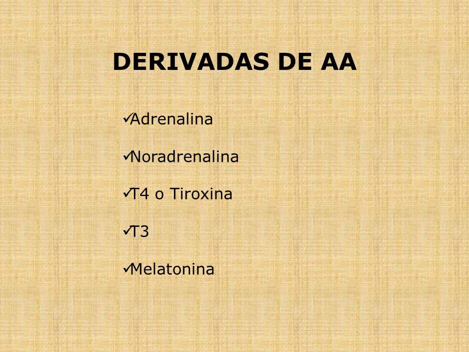 DERIVADAS DE AA Adrenalina Noradrenalina T4 o Tiroxina T3 Melatonina