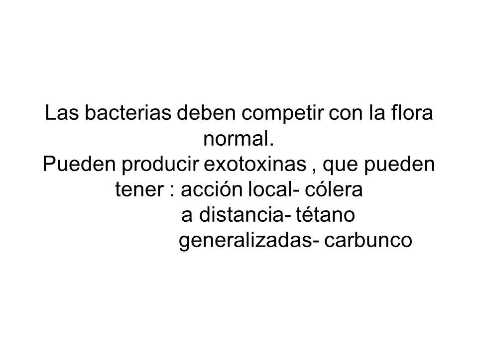 Las bacterias deben competir con la flora normal