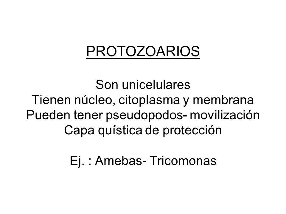 PROTOZOARIOS Son unicelulares Tienen núcleo, citoplasma y membrana Pueden tener pseudopodos- movilización Capa quística de protección Ej.