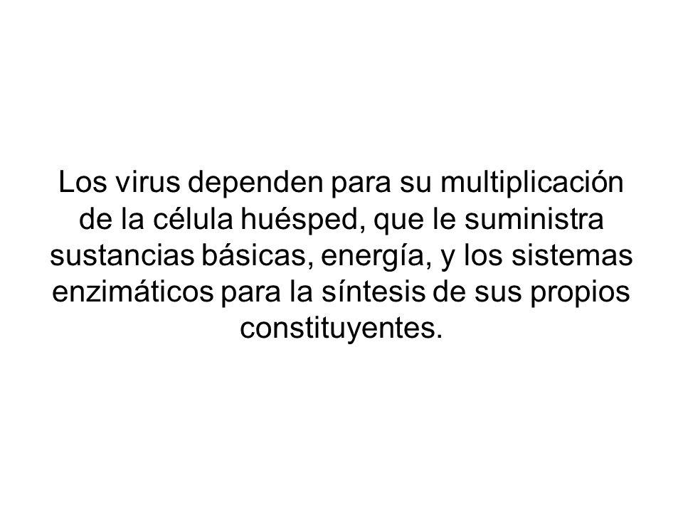 Los virus dependen para su multiplicación de la célula huésped, que le suministra sustancias básicas, energía, y los sistemas enzimáticos para la síntesis de sus propios constituyentes.