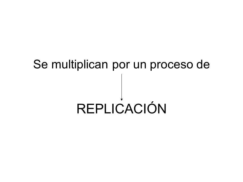 Se multiplican por un proceso de REPLICACIÓN