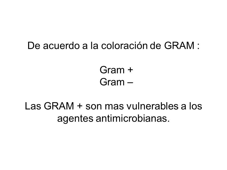 De acuerdo a la coloración de GRAM : Gram + Gram – Las GRAM + son mas vulnerables a los agentes antimicrobianas.