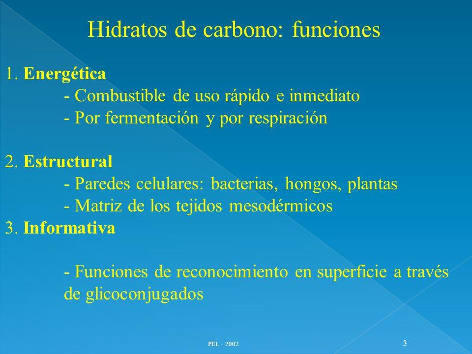 Hidratos de carbono: funciones