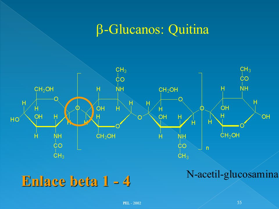 b-Glucanos: Quitina N-acetil-glucosamina Enlace beta 1 - 4 PEL - 2002