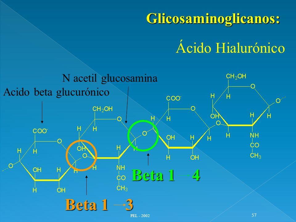 Beta 1 4 Beta 1 3 Glicosaminoglicanos: N acetil glucosamina