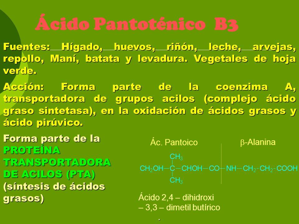 Ácido Pantoténico B3 Fuentes: Hígado, huevos, riñón, leche, arvejas, repollo, Maní, batata y levadura. Vegetales de hoja verde.