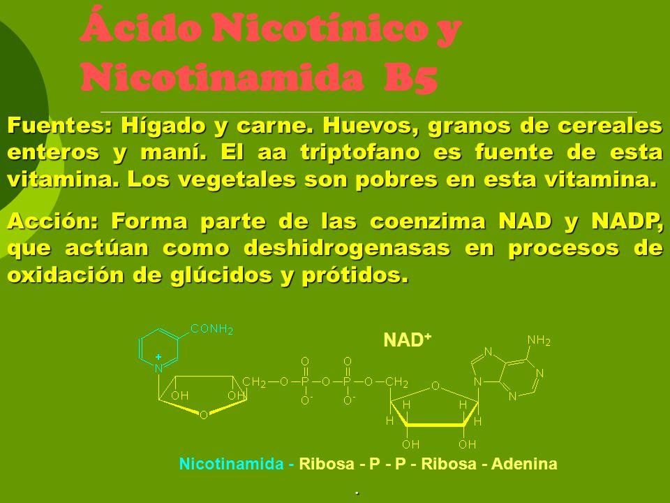 Ácido Nicotínico y Nicotinamida B5