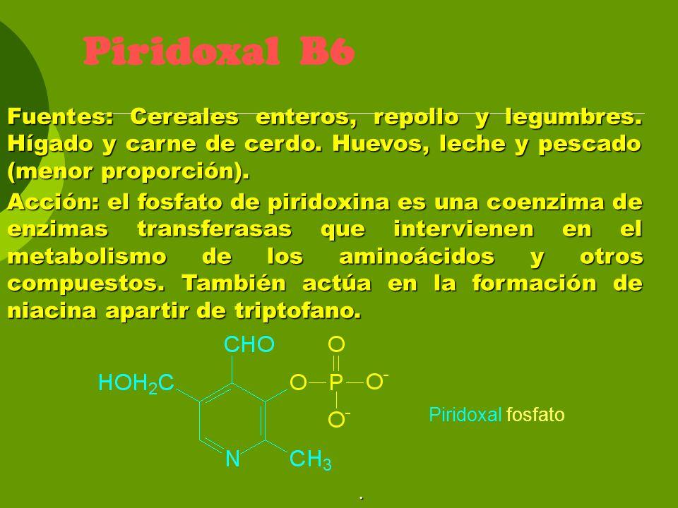 Piridoxal B6 Fuentes: Cereales enteros, repollo y legumbres. Hígado y carne de cerdo. Huevos, leche y pescado (menor proporción).