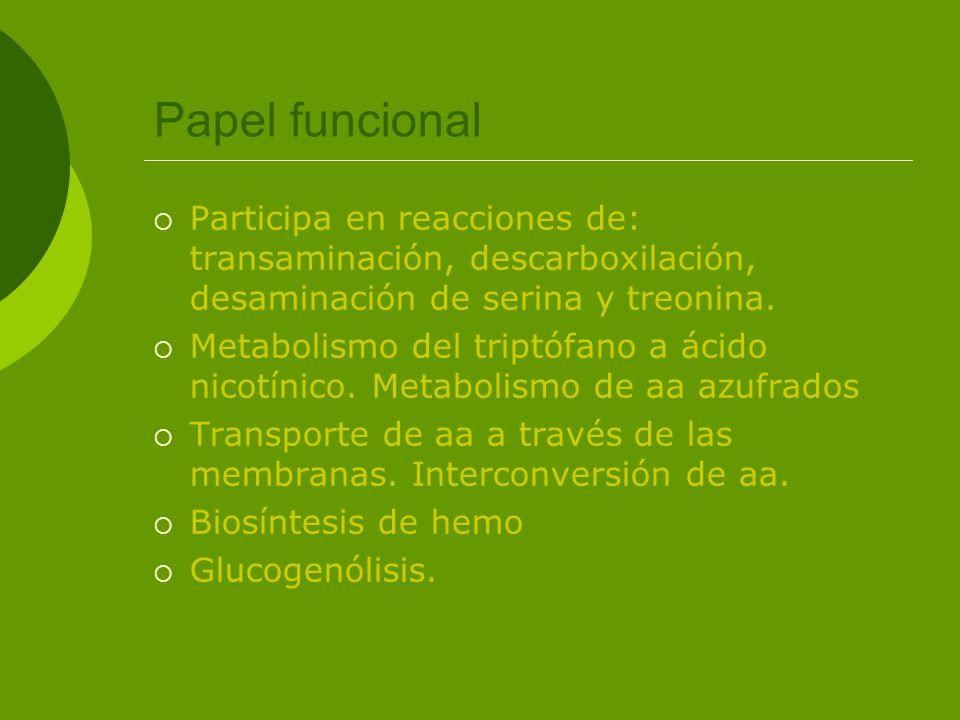 Papel funcional Participa en reacciones de: transaminación, descarboxilación, desaminación de serina y treonina.