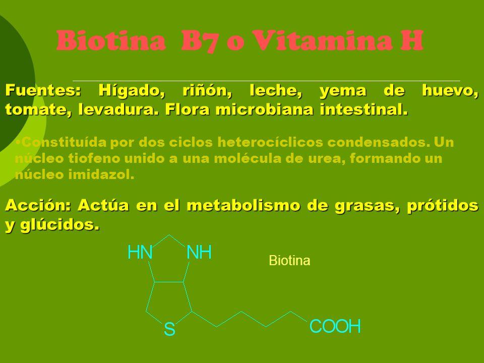 Biotina B7 o Vitamina H Fuentes: Hígado, riñón, leche, yema de huevo, tomate, levadura. Flora microbiana intestinal.