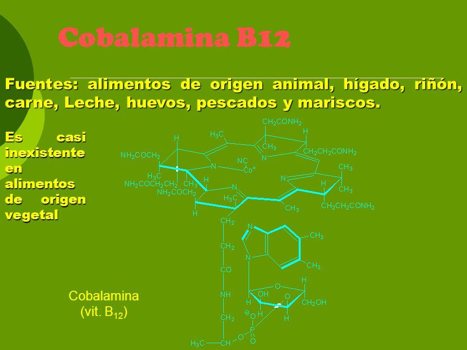 Cobalamina B12 Fuentes: alimentos de origen animal, hígado, riñón, carne, Leche, huevos, pescados y mariscos.