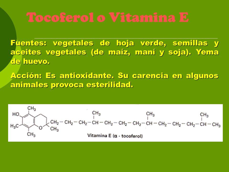 Tocoferol o Vitamina E Fuentes: vegetales de hoja verde, semillas y aceites vegetales (de maíz, maní y soja). Yema de huevo.