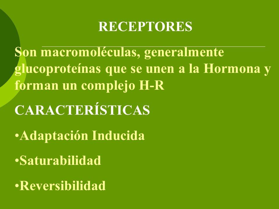 RECEPTORES Son macromoléculas, generalmente glucoproteínas que se unen a la Hormona y forman un complejo H-R.