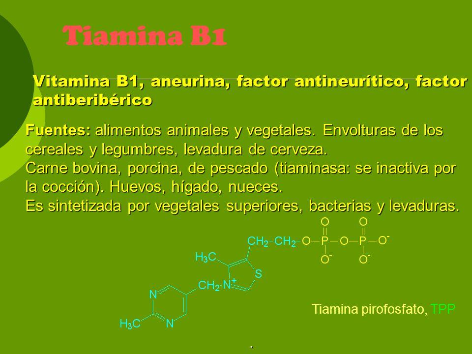 Tiamina B1 Vitamina B1, aneurina, factor antineurítico, factor antiberibérico.