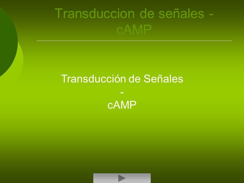 Transduccion de señales - cAMP