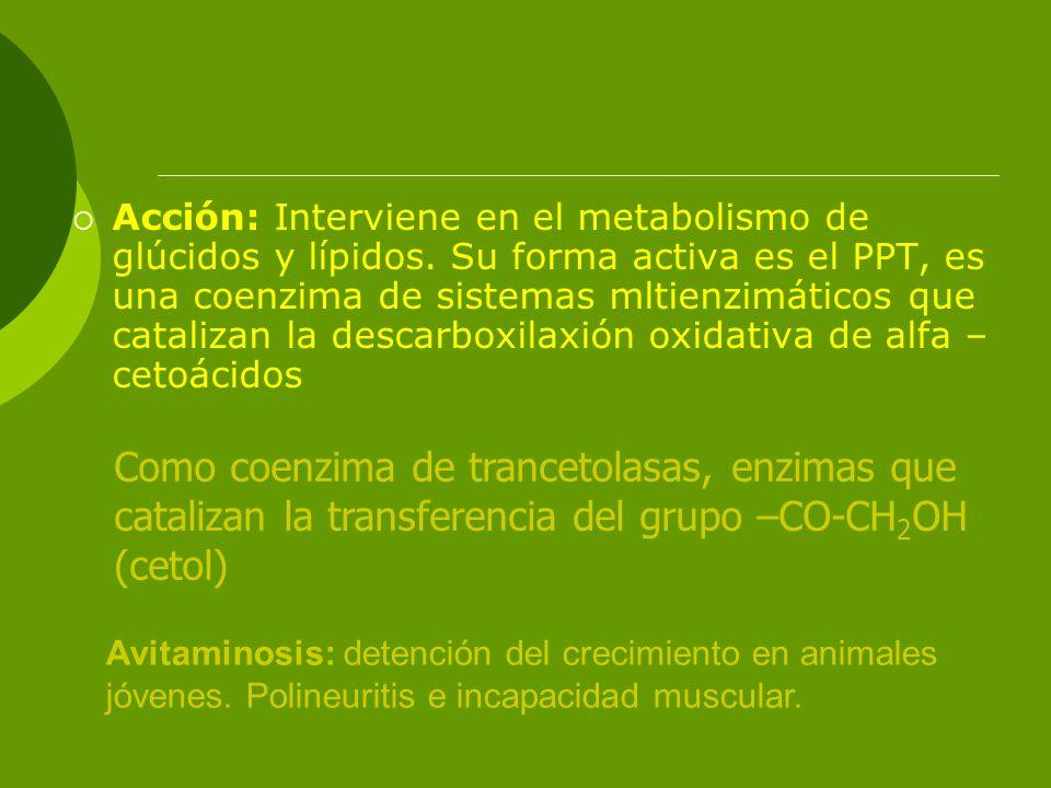 Acción: Interviene en el metabolismo de glúcidos y lípidos