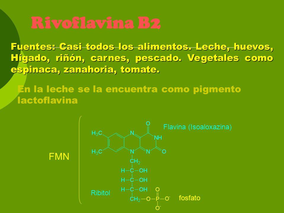 Rivoflavina B2 Fuentes: Casi todos los alimentos. Leche, huevos, Hígado, riñón, carnes, pescado. Vegetales como espinaca, zanahoria, tomate.