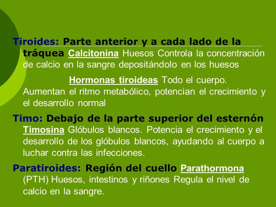 Tiroides: Parte anterior y a cada lado de la tráquea Calcitonina Huesos Controla la concentración de calcio en la sangre depositándolo en los huesos