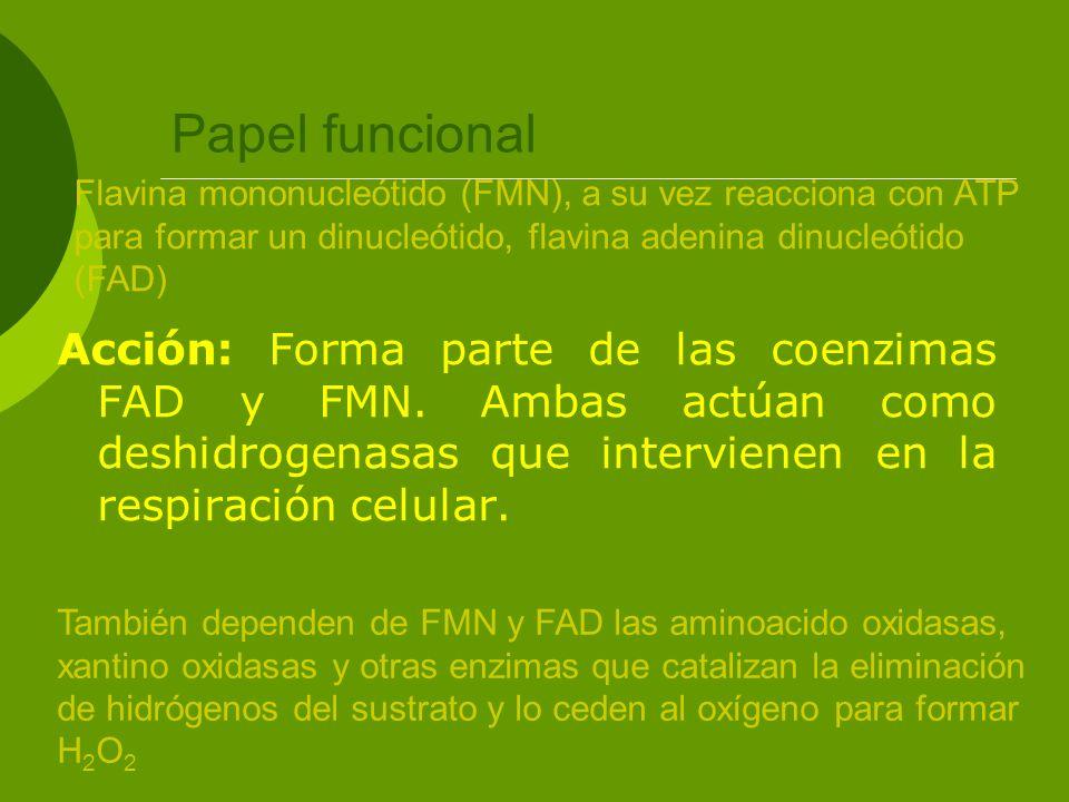 Papel funcional Flavina mononucleótido (FMN), a su vez reacciona con ATP para formar un dinucleótido, flavina adenina dinucleótido (FAD)