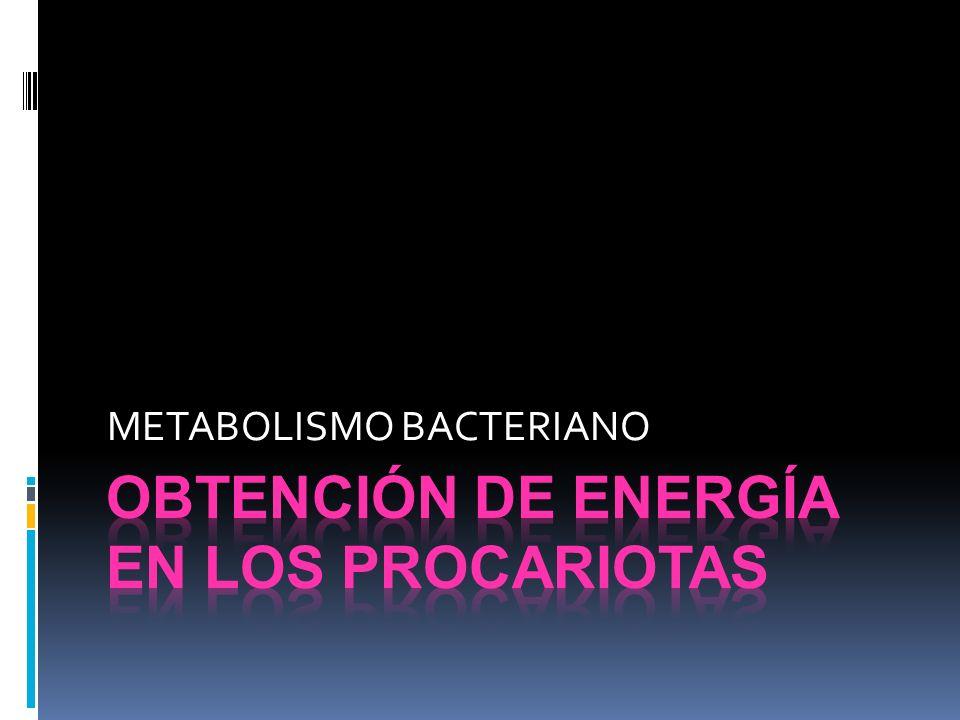 Obtención de energía en los procariotas