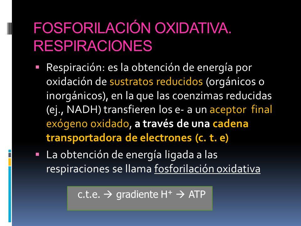 FOSFORILACIÓN OXIDATIVA. RESPIRACIONES
