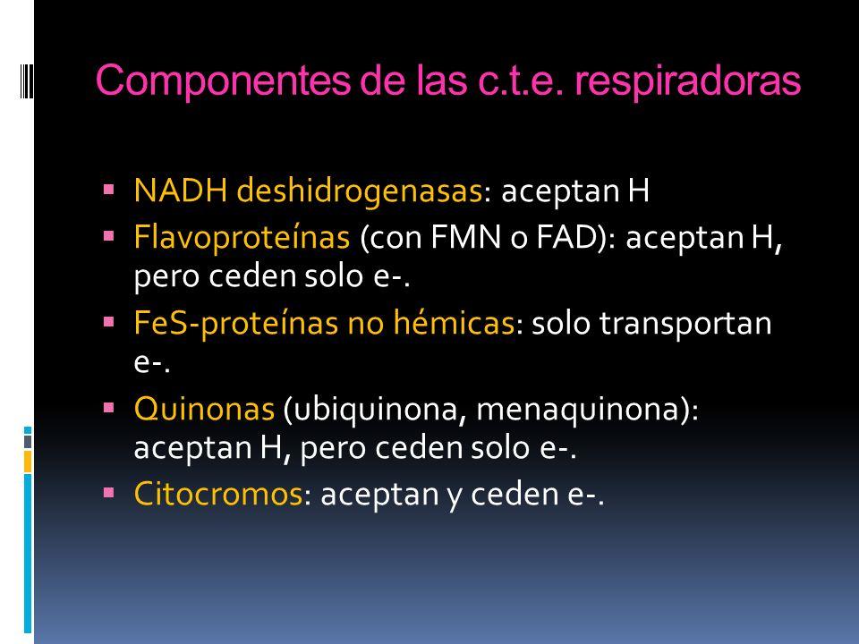 Componentes de las c.t.e. respiradoras