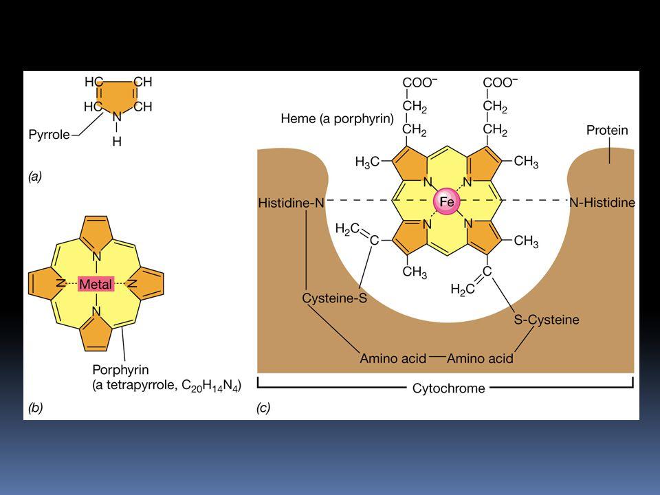 Citocromos: estructura del anillo tetrapirrólico acomplejado con Fe, implicado en la transferencia de electrones.